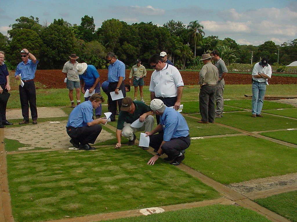 Turf Collection -